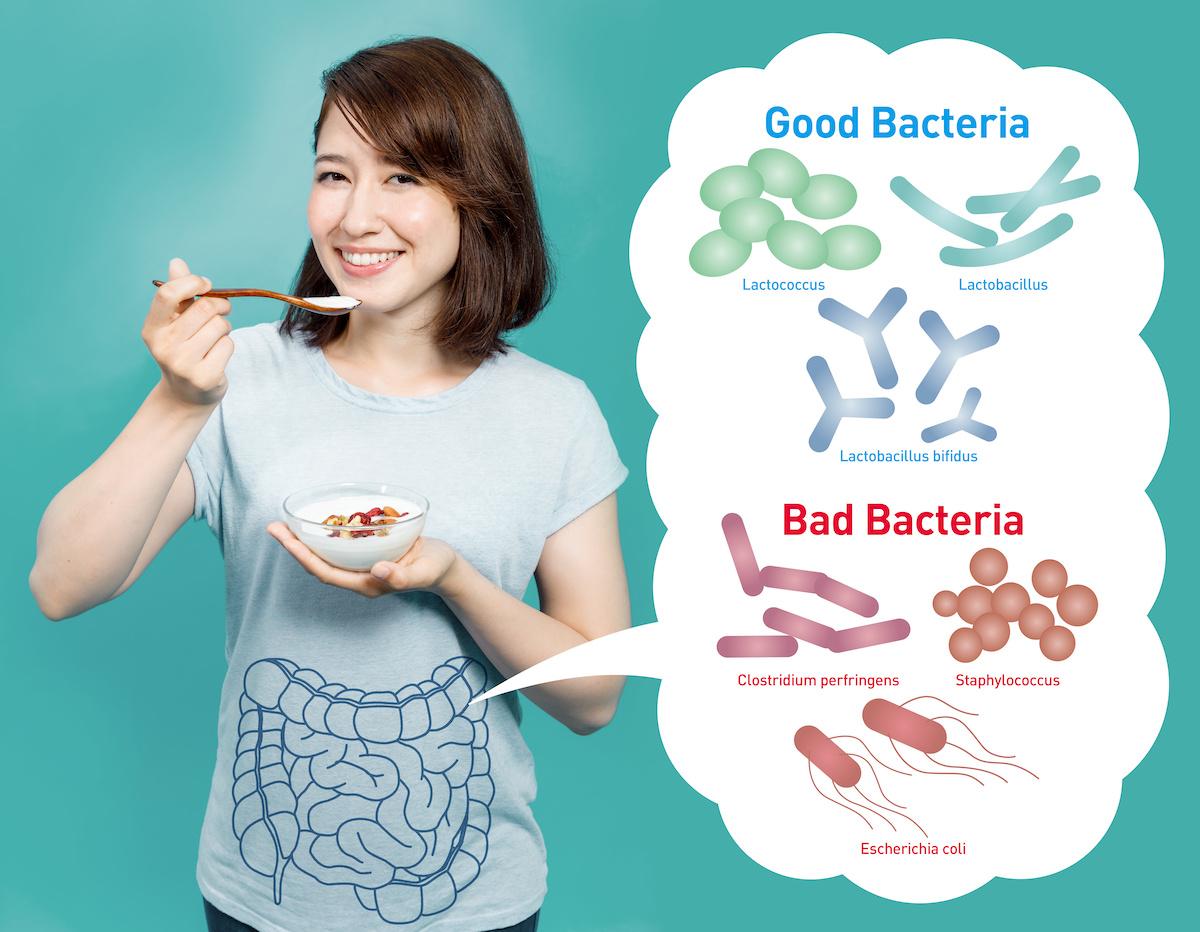 「乳酸菌サプリ」痩せ菌を増やし、脂肪をためない
